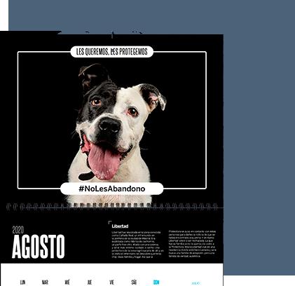 AdoptCam, sorteo calendario solidario