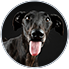 AdoptCam, mascota Polo