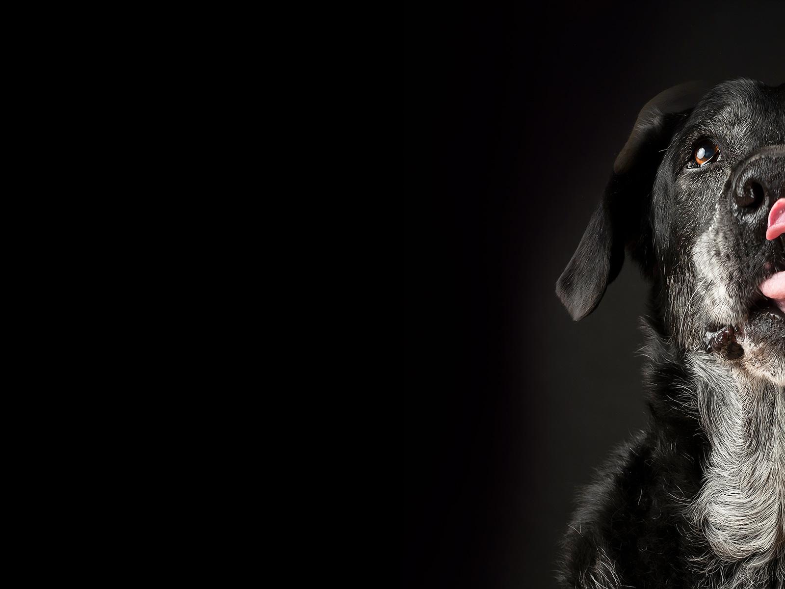 AdoptCam, mascota Gus