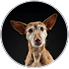 AdoptCam, mascota Paula