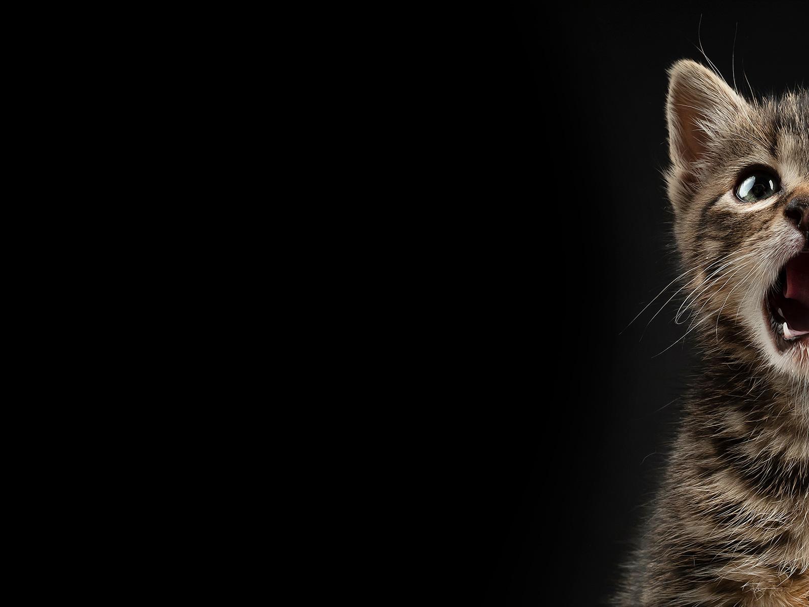 AdoptCam, mascota Misifú