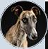 AdoptCam, mascota Harley