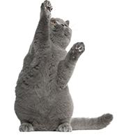 Gato cupón
