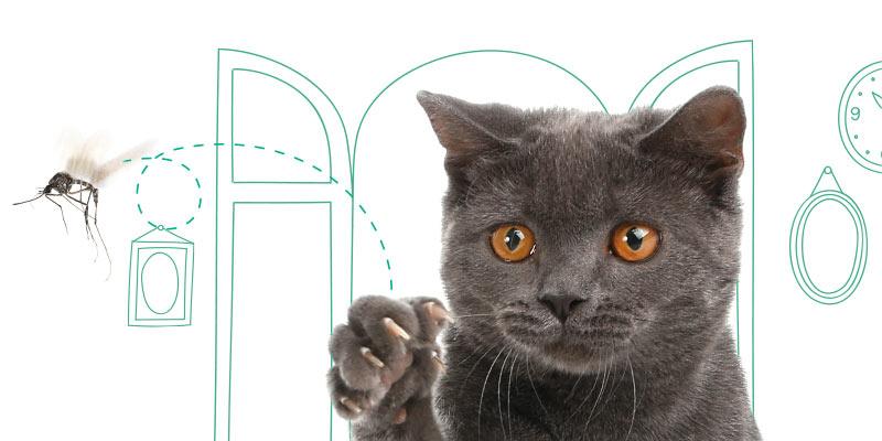 parasitos de gatos en insectos
