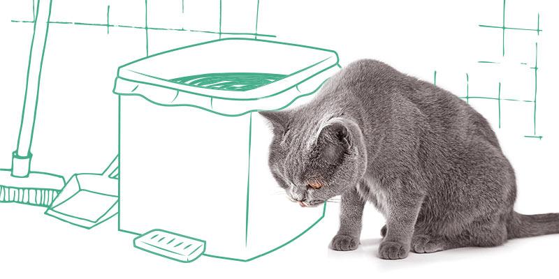 parasitos de gatos en la basura