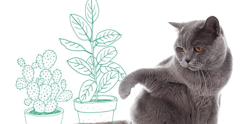 parasitos de gatos en plantas