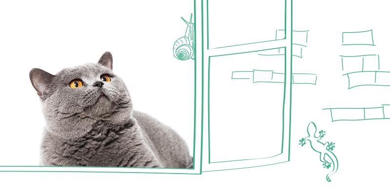parasitos de gatos en ventana