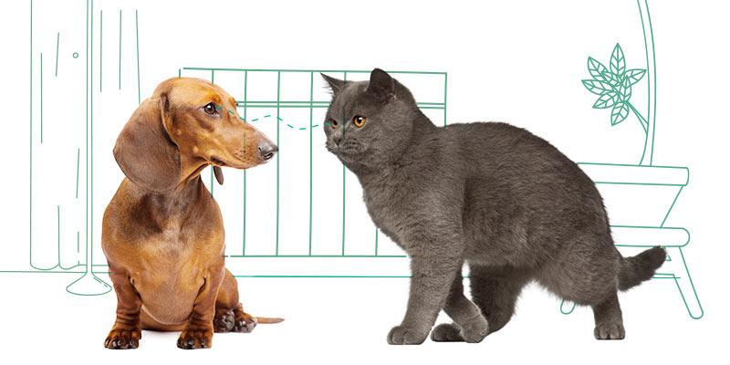 parasitos de gatos en otras mascotas