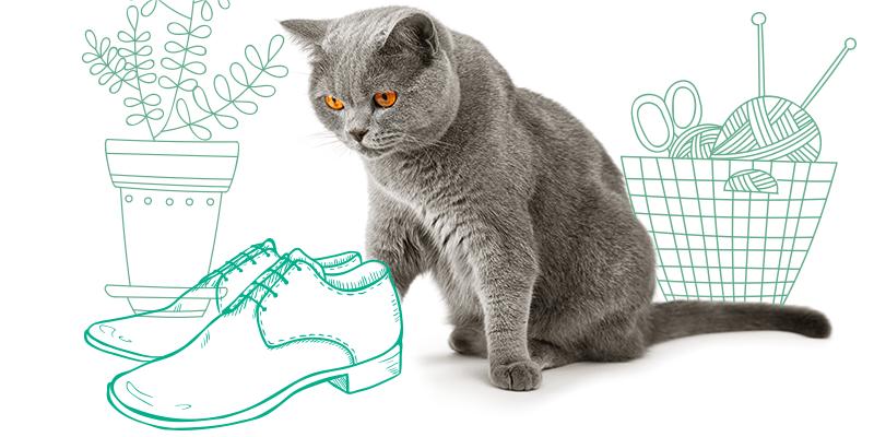 parasitos de gatos en zapatos