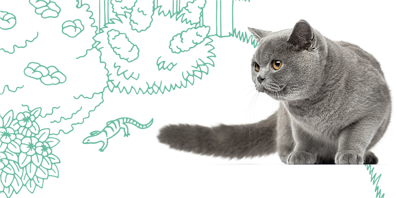 parasitos de gatos en animales pequenos