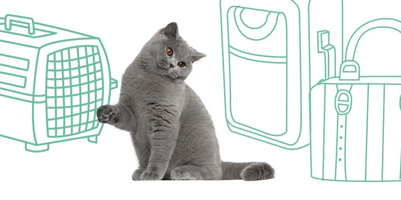 parasitos de gatos al viajar