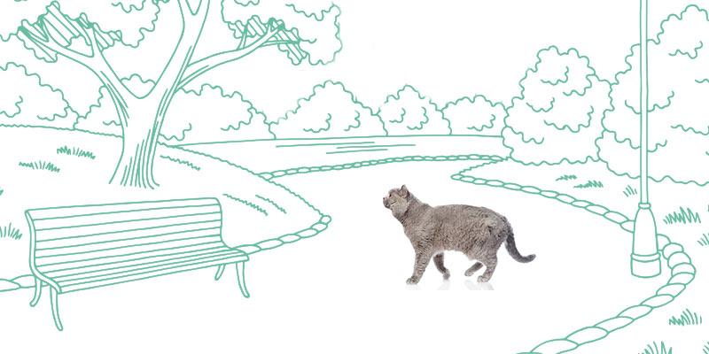 parasitos de gatos en calle y parque
