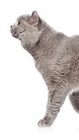desparasitar gatos