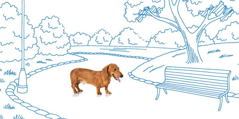 parasitos de perros en zonas de paseo