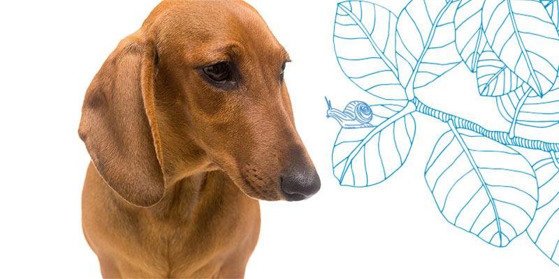 parasitos de perros en caracoles