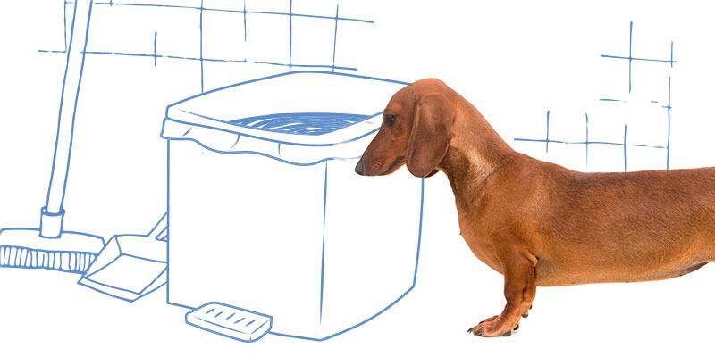 parasitos de perros en basura