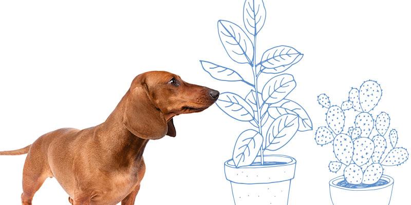 parasitos de perros en plantas