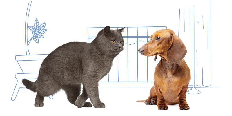 parasitos de perros en mascotas