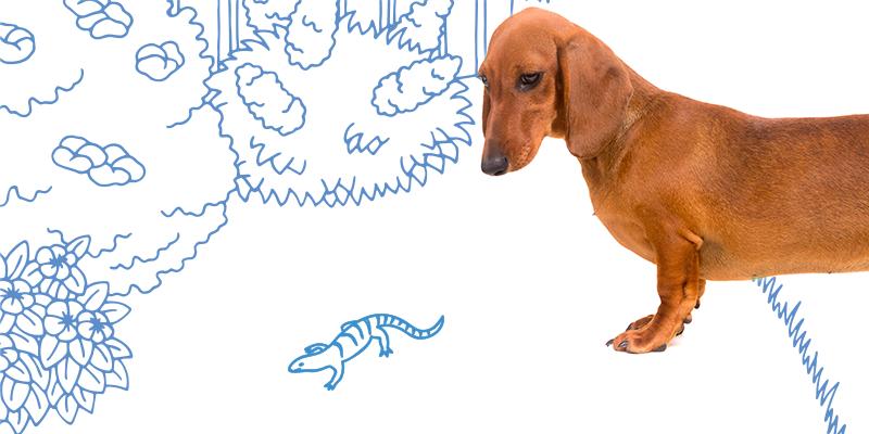 parasitos de perros en animales pequenos
