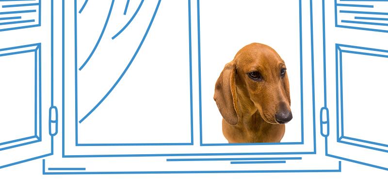 parasitos de perros en ventana