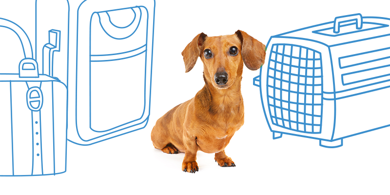 parasitos de perros al viajar