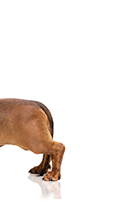 Doble protección mensual para perros