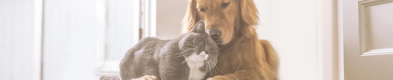 Desparasitación perros y gatos
