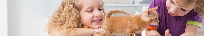 parasitos de perros y gatos que afectan a los humanos