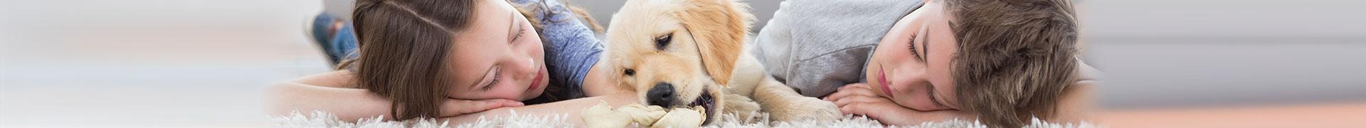 parasitos en perros y gatos que afectan al humano