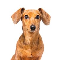 parasitos en perros que afectan al humano