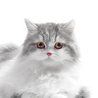 parasitos en gatos contagio a humanos