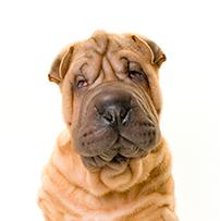 parasitos de perros en humanos