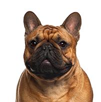 parasitos de perros en viajes