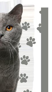 petcam gatos