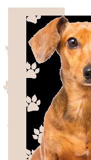 petcam perros